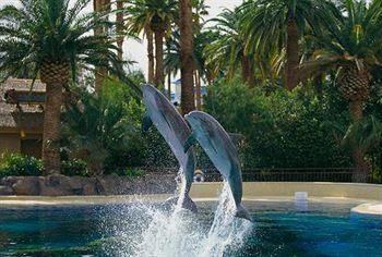 - Mirage Resort & Casino